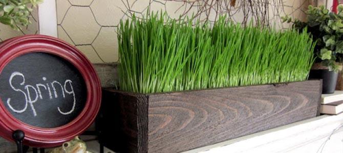Decore sua casa com vasos de grama de trigo super verdinhos