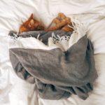 Travesseiro para pets