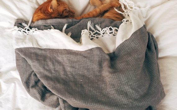 A importância de usar um travesseiro específico para pets