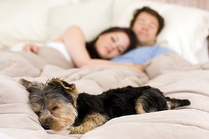 Dormir com animais pode te ajudar no sono